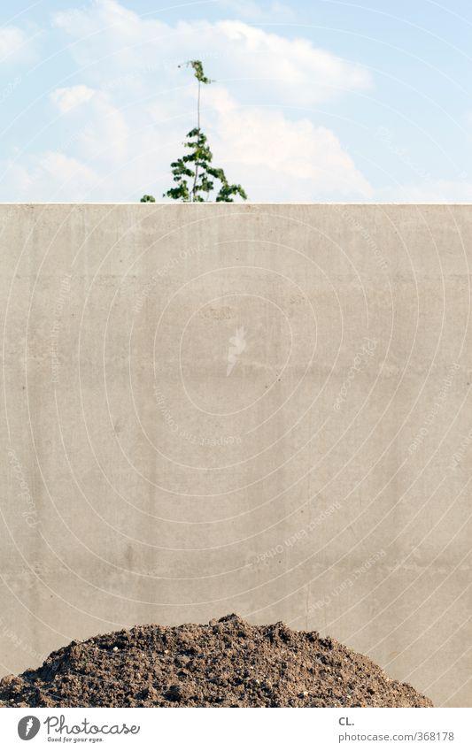 mauer Baustelle Umwelt Natur Himmel Baum Mauer Wand Stein Sand Beton bauen Wachstum trist Stadt grau Ausdauer standhaft Zukunftsangst Schüchternheit Frustration