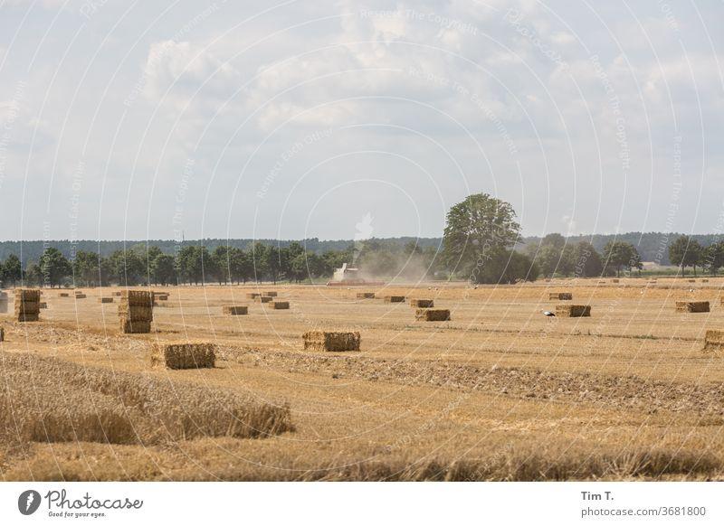 Ernte in der Lausitz Brandenburg Feld Himmel Landschaft Außenaufnahme Wolken Natur Menschenleer Farbfoto Umwelt Schönes Wetter Tag Horizont Pflanze