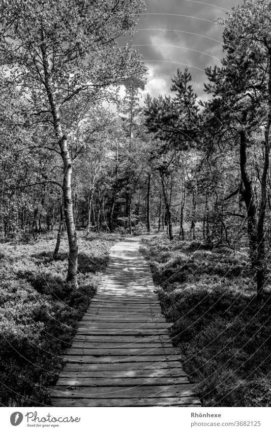 s/w Fotografie schwarzes  Moor , Licht und Schatten Bohlenweg hell Außenaufnahme Landschaft Menschenleer Kontrast Wald Baum ruhig dunkel scwarzweiß Nationalpark