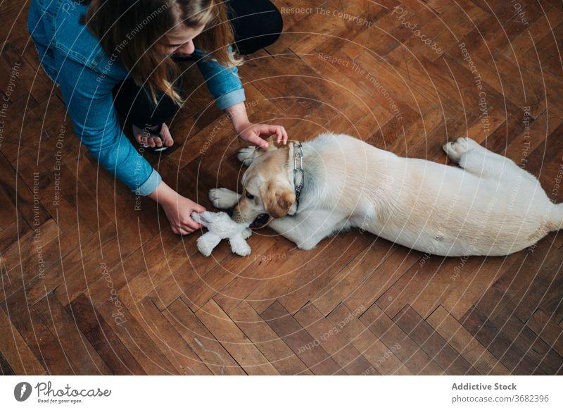Frau spielt mit Hund zu Hause spielen heimwärts Spielzeug ziehen Haustier Besitzer Parkett Spaß Aktivität labrador retriever jung Stock Zusammensein Tier Freund