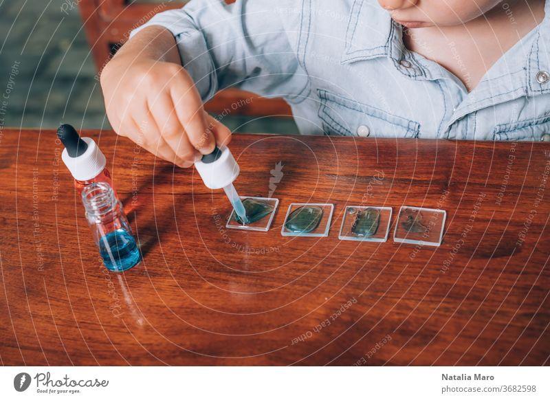 Labortätigkeit eines kleinen Jungen mit gefärbtem Wasser, Pipette und Glasscherben. Homeschooling-Konzept Experiment gefärbtes Wasser Kind Bildung Mutter