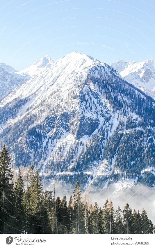 so high Winter Schnee Winterurlaub Berge u. Gebirge Umwelt Natur Landschaft Himmel Wolkenloser Himmel Sonnenlicht Schönes Wetter Nebel Eis Frost Pflanze Baum
