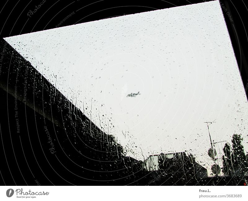 Als es regnete schwamm hoch am Himmel ein Beluga-Wal direkt an meinem Fenster vorbei. Flugzeug Regentropfen Dächer Pappel Baum Oberlicht Regenwetter