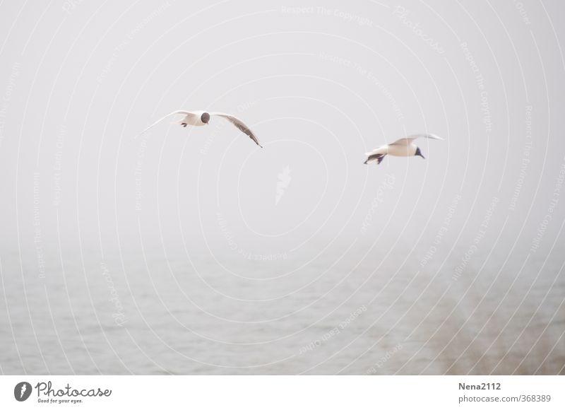 Fly in fog Umwelt Natur Landschaft Tier Luft Wasser Himmel Wolken Horizont schlechtes Wetter Nebel Regen Nordsee Ostsee Meer Vogel Flügel 2 fliegen grau Möwe