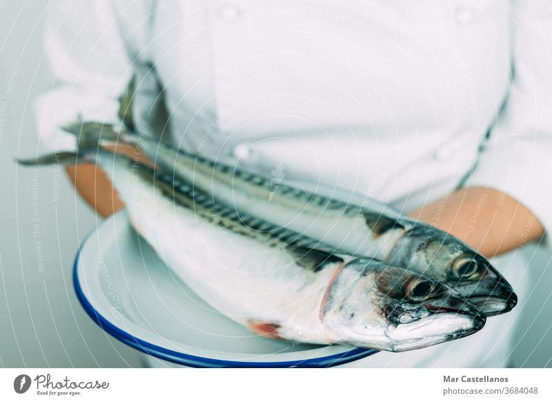 Frau in Kochmontur zeigt ein Gericht mit frischem Fisch. Konzept der Küche. Frische Makrele auf einem weißen Teller. Küchenchef Speise Hand Person professionell