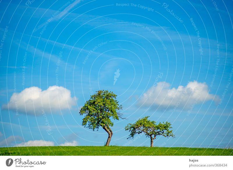Bäume mit Wolken ruhig Meditation Ferne Freiheit Sommer Landwirtschaft Forstwirtschaft Umwelt Natur Landschaft Baum Wiese alt frei blau grün friedlich Idylle