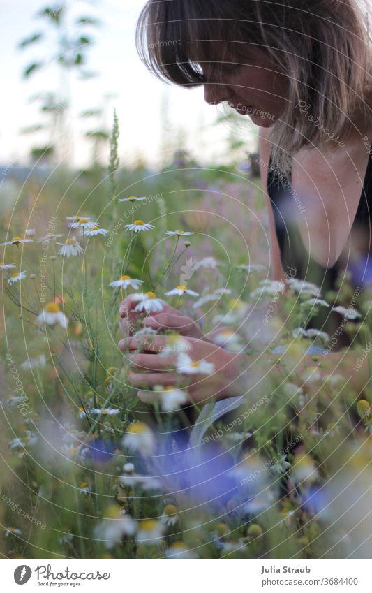 Junge Frau kniet im Blumenfeld und pflückt Kamillenblüten ponyfrisur Kurzhaarschnitt Sommer sommerlich Blumenwiese Wildblumen gelb weiß grün Natur draußen