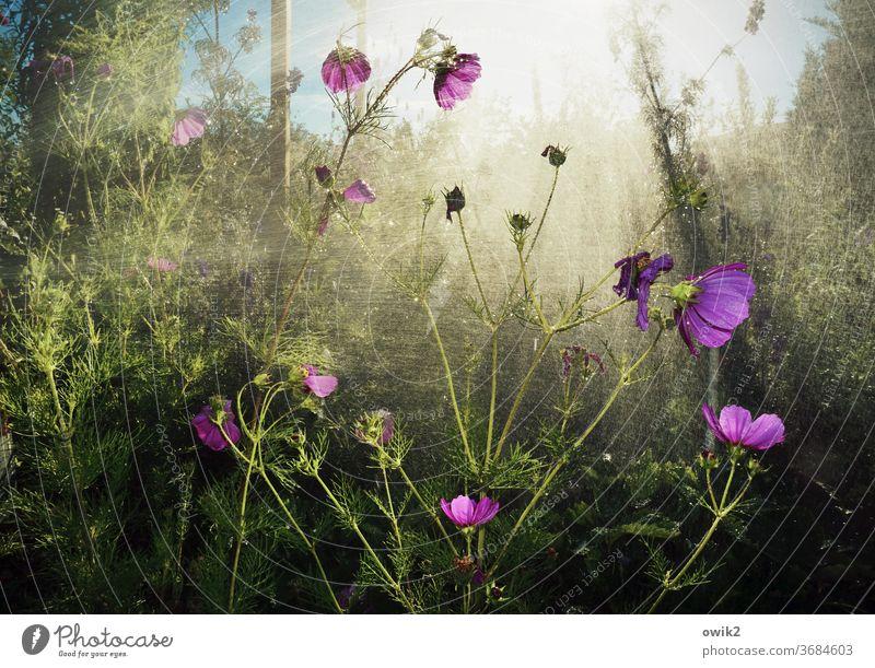 Sprühregen Garten Regen Dusche Wasser nass Pflanze Wachstum gießen Wassertropfen Sträucher Natur Außenaufnahme feucht Nahaufnahme Himmel Sonnenlicht