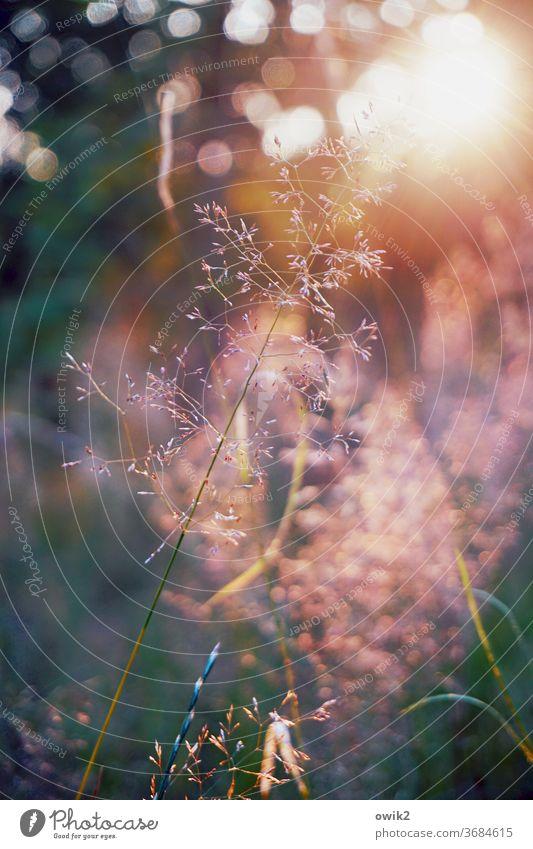 Trockene Gräser Garten Wiese Blumenwiese Farbfoto Sommer Gras Unschärfe Bewegungsunschärfe Menschenleer Schwache Tiefenschärfe schön Tag Umwelt Nahaufnahme