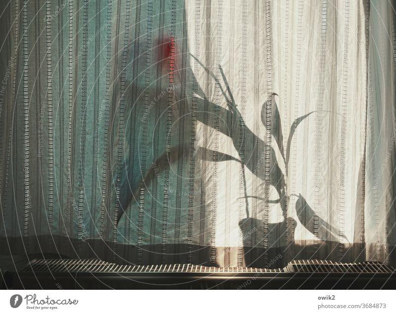 Sprich leise Fenster Detailaufnahme Innenaufnahme Licht Schatten Kontrast Blumen Muster Strukturen & Formen geschlossen Totale Sonnenlicht Tag Verschönerung