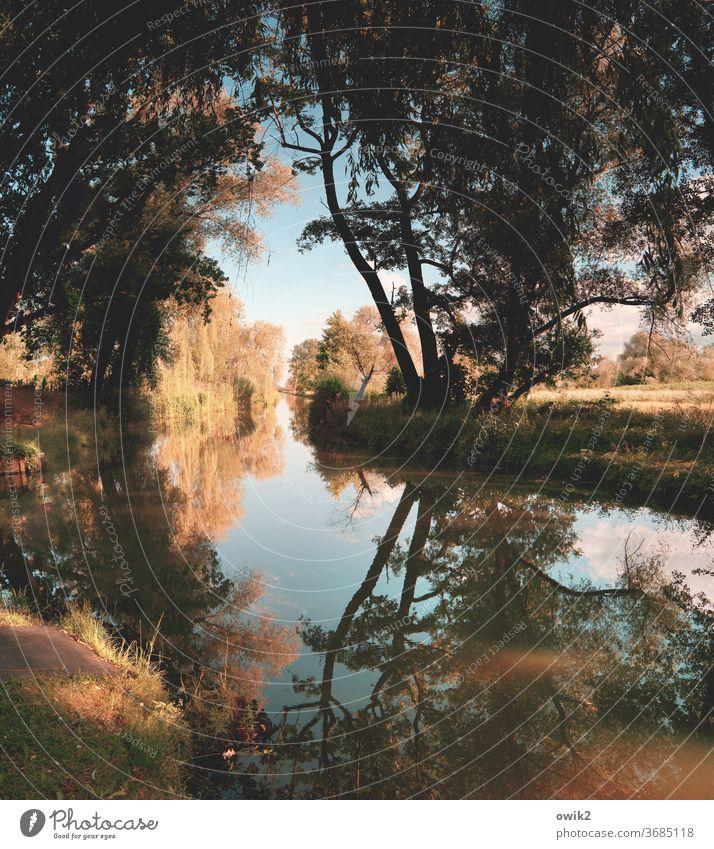 Uferlos Landschaft friedlich Idylle Wasser Baum Menschenleer ruhig Reflexion & Spiegelung Himmel Kleiner Spreewald Brandenburg geheimnisvoll Pflanze Sträucher