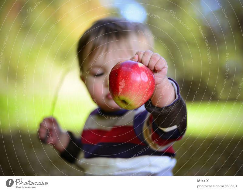 Gesundes Spielzeug Mensch Kind Herbst Spielen Gesunde Ernährung Essen Gesundheit Lebensmittel Frucht Kindheit Baby frisch niedlich süß Apfel