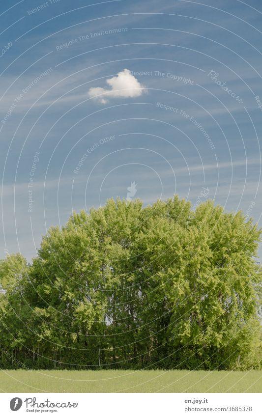 Baum und Wolke grün blau Sommer Schönes Wetter schleierwolken Wiese Baumgruppe Himmel Natur Landschaft Menschenleer Farbfoto Außenaufnahme Tag Pflanze Gras