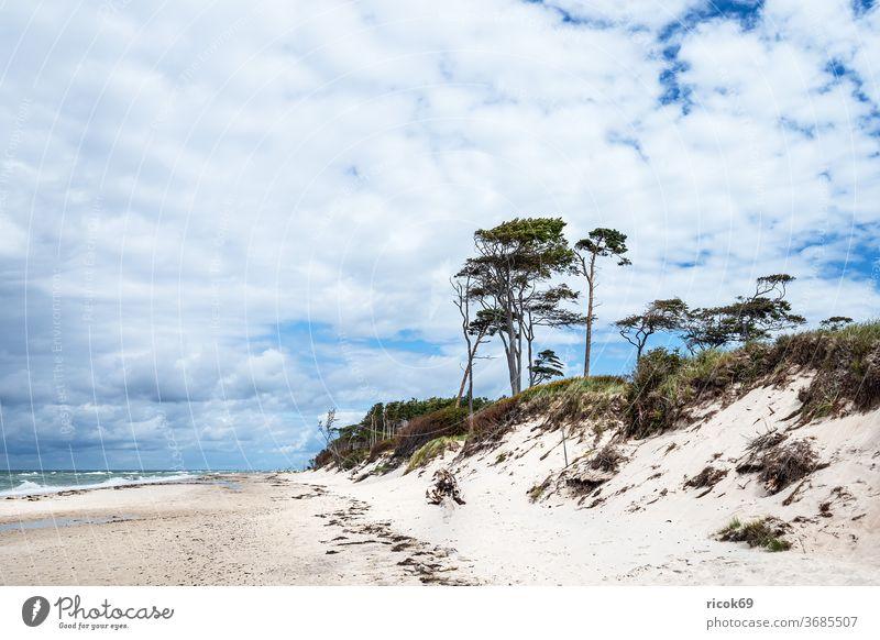 Der Weststrand auf dem Fischland-Darß Küste Ostsee Ostseeküste Meer Strand Baum Wald Bäume Küstenwald Himmel Wolken blau Mecklenburg-Vorpommern Landschaft Natur