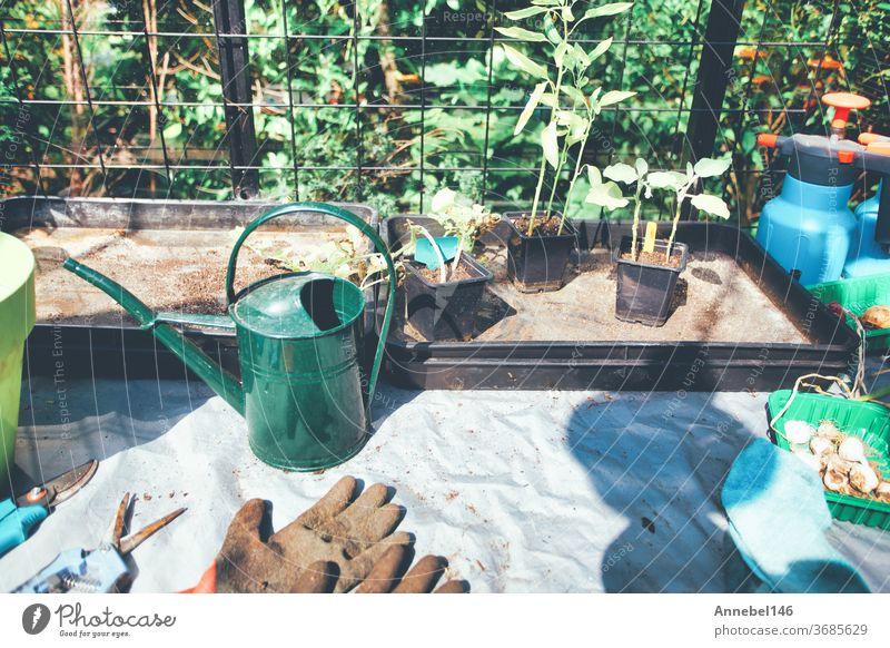 Haushaltwaren für den Garten. Gummihandschuhe, Blumentöpfe, Setzlingskästen, Gewächshaus im Hintergarten, Pflanzen für zu Hause Gartenmaterial Frühling Zucchini