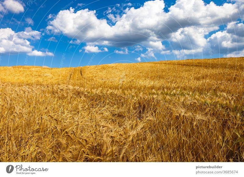 Wolken am Himmel überm Kornfeld Feld Getreide Getreidefeld Erntezeit Sommer blau weiß gelb Sonne Tag Tageslicht Spur Landschaft Agrarwirtschaft Nutzpflanze