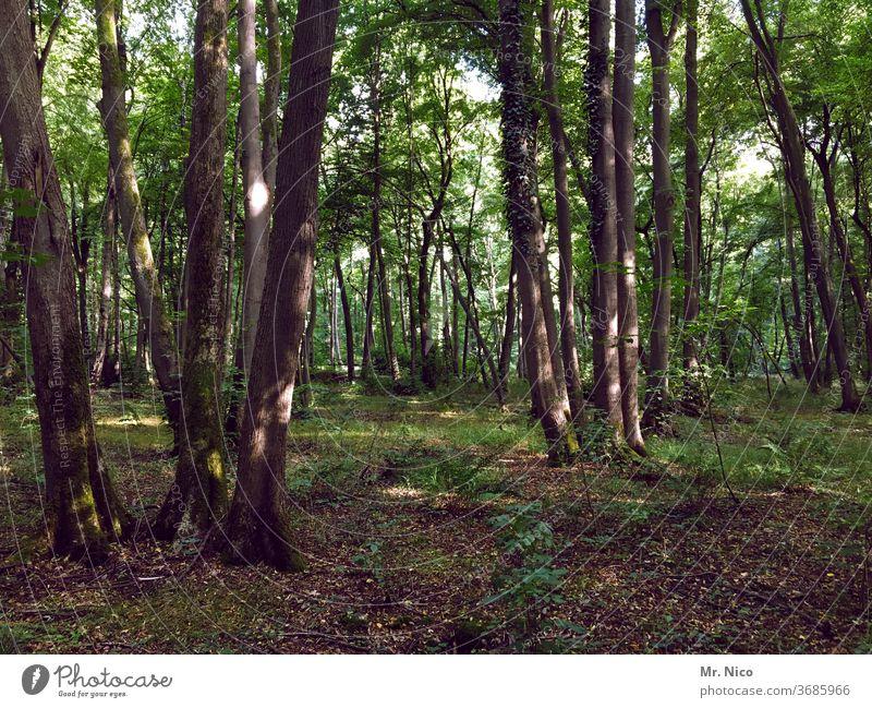 ich glaub, ich steh im Wald Waldboden Natur grün Pflanze Umwelt Baum Waldspaziergang Waldlichtung Waldsterben Waldstimmung Baumstamm Landschaft entdecken