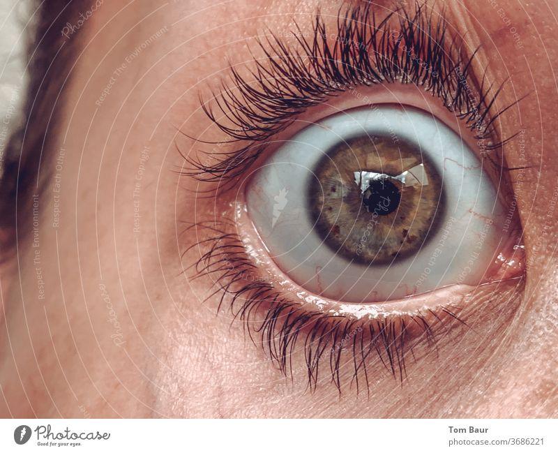 Open your eye Auge Nahaufnahme aufgerissene augen Frau Pupille Wimpern Blick Gesicht Regenbogenhaut Makroaufnahme Mensch Detailaufnahme Augenbraue Haut Farbfoto