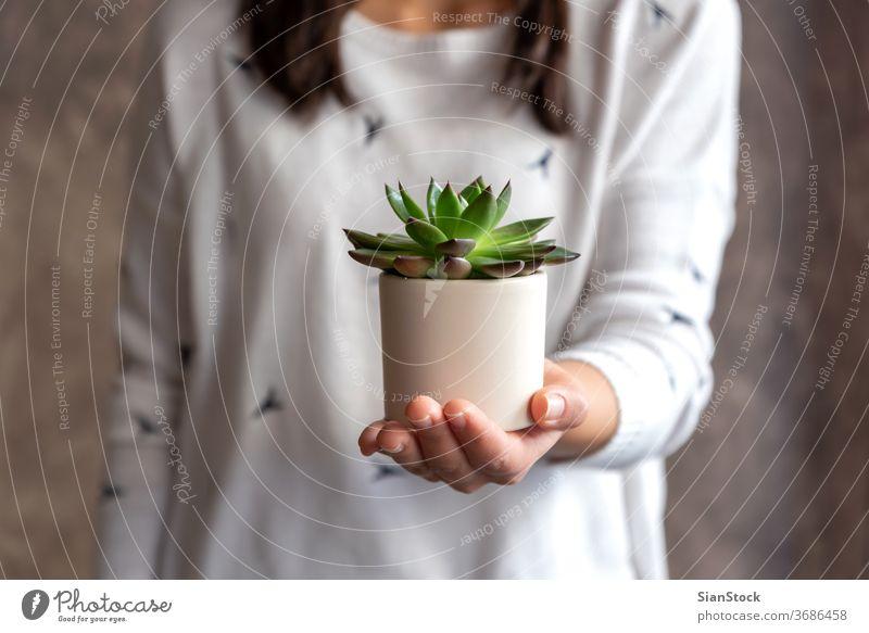Frau hält sukkulente Pflanze Topf Blume Beteiligung Halt Hände Blumenhändler Geschenk geblümt weiß zeigen im Innenbereich Sukkulente. Hintergrund Person