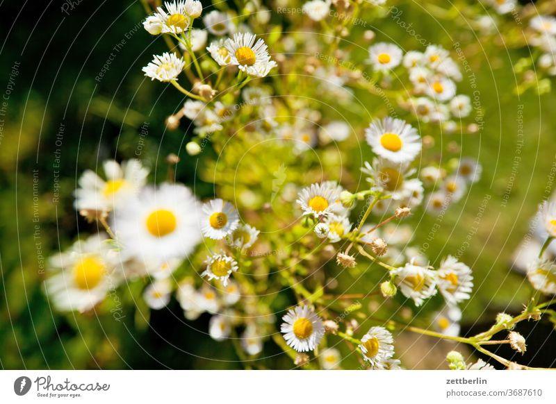 Kleine Blumen. blume blühen blüte erholung ferien garten kleingarten kleingartenkolonie menschenleer natur pflanze ruhe schrebergarten sommer stamm strauch