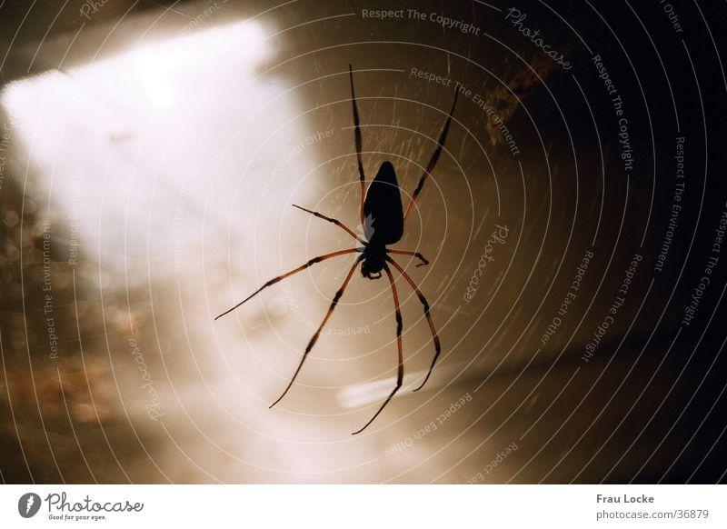 Pfui-Spinne dunkel Verkehr gruselig Keller Spinnennetz Seidenspinne