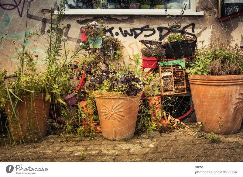 TT Gegensätze | Stillstand trotz positiver Wachstumsentwicklung Fahrrad Pflanze Blume Tag Topfpflanze Blüte Dekoration & Verzierung grün Garten Mobilität