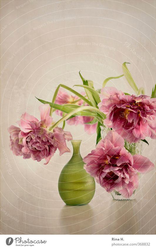 Still Wohnung Dekoration & Verzierung Blume Blüte Tulpe Blühend verblüht ästhetisch elegant hell grün rosa Stillleben Vase Menschenleer Textfreiraum oben