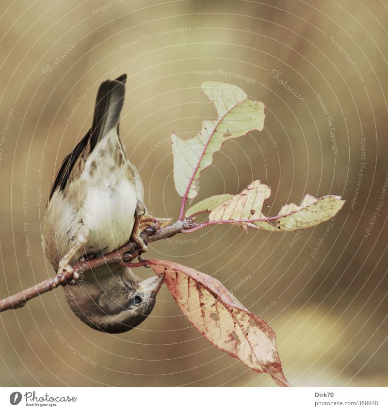 Zweigartistin grün Pflanze rot Tier Blatt schwarz gelb Herbst grau Essen Garten braun Vogel Wildtier Sträucher Klettern