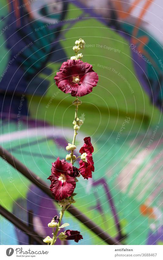 Schöne Wildblume Blume grafitti Natur Blüte grün Sommer Treppengeländer blühen Frühling Blühend Außenaufnahme Garten Farbfoto schön natürlich Duft Umwelt