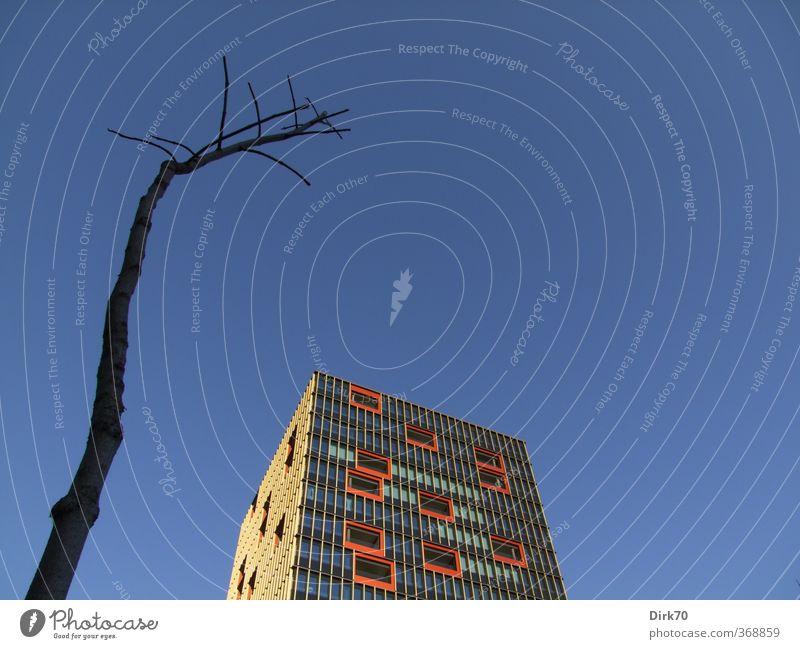 Menetekel Wolkenloser Himmel Schönes Wetter Baum Ast Stadt Menschenleer Hochhaus Bauwerk Gebäude Architektur Bürogebäude Fassade Glas Metall bedrohlich eckig