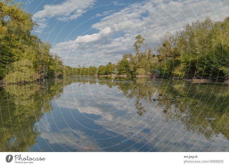 Spiegelung von Himmel und Bäumen im Altrhein Rheinauen Idylle Reflexion & Spiegelung Seeufer Wasserspiegelung Wolken Schönes Wetter Natur Wald grün Landschaft