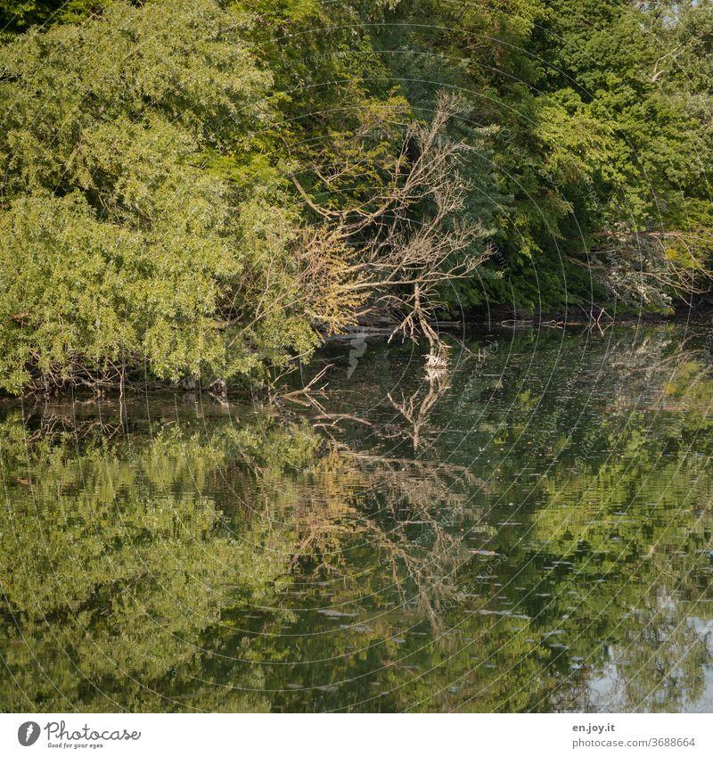 Natur pur Idylle Rheinauen Wasser Spiegelung Bäume Äste Wald See grün Landschaft Ruhe Stille natürlich Altrhein Reflexion & Spiegelung Seeufer Menschenleer