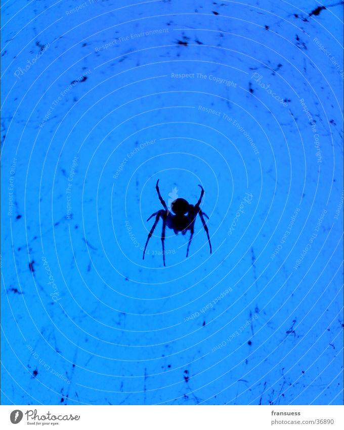 here comes a spider blau Verkehr Spinne reduzieren