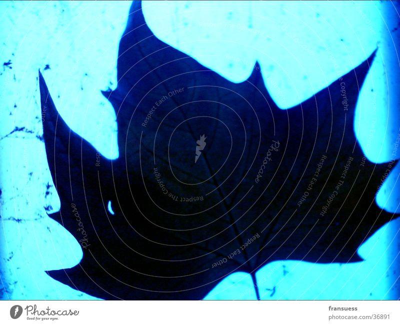 blauer Herbst Lampe Blatt Ahornblatt