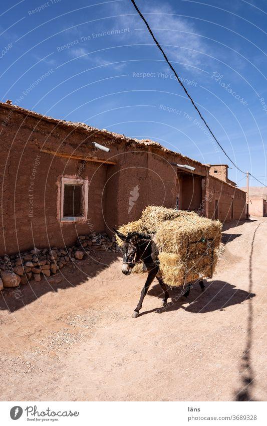 Warentransport Esel Marokko Transport Strohballen Heuballen Ernte Landwirtschaft Tier Straße Logistik Außenaufnahme Ortschaft