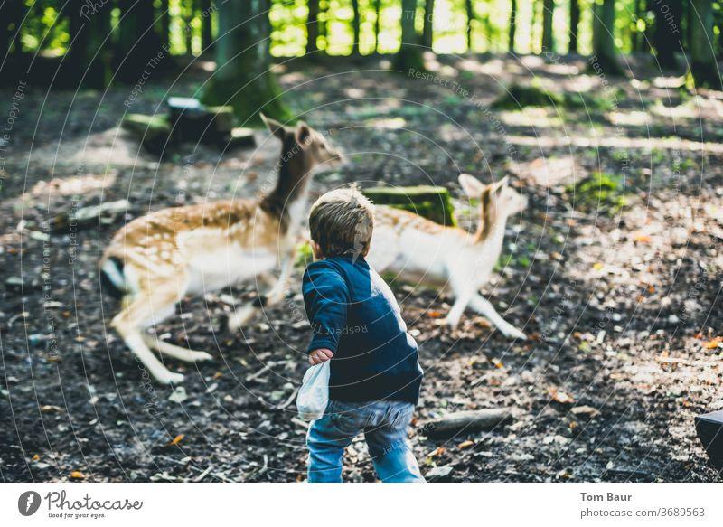 Junge füttert Rehe die jedoch flüchten Kind Rehkitz füttern Wald Angsthase Futter Spaß haben Abenteuer Waldlichtung rehbock