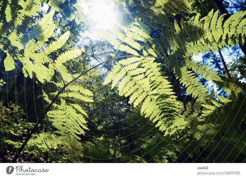 Unterwelt Umwelt Natur Landschaft Pflanze ruhig Idylle Sträucher Schönes Wetter grün Wachstum Wald Echte Farne friedlich Außenaufnahme Strukturen & Formen