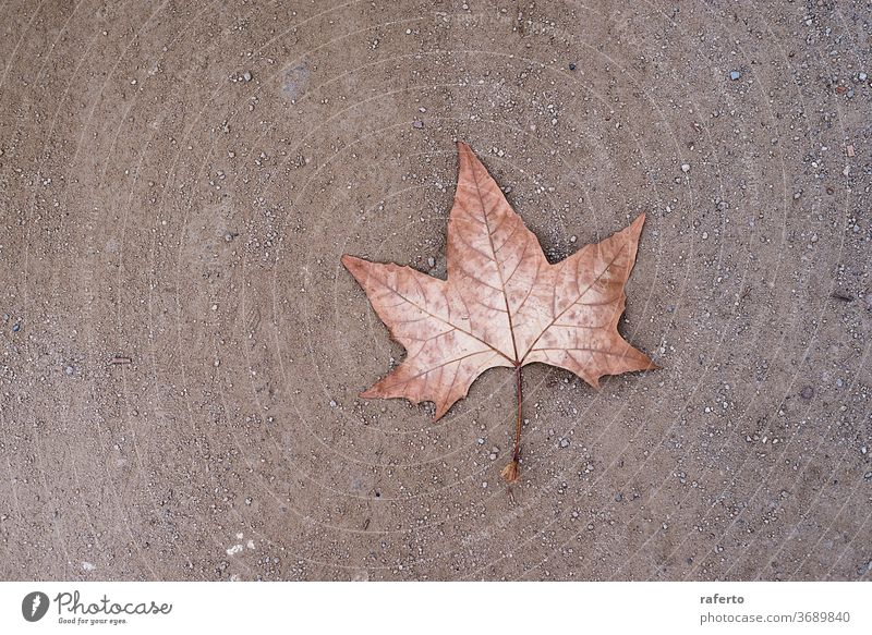 Ein einsames trockenes Blatt auf dem Boden Hintergrund Laubwerk Herbst Muster Saison Konzept Park Natur fallen abstrakt 1 Umwelt gelb Straße Pflanze