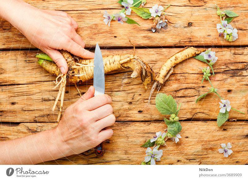 Althäae-Wurzel in der Kräutermedizin althaea Kräuterbuch althaea officinalis Medizin Rhizom Pflanze Kraut radix Heilpflanzen natürlich Marshmallow