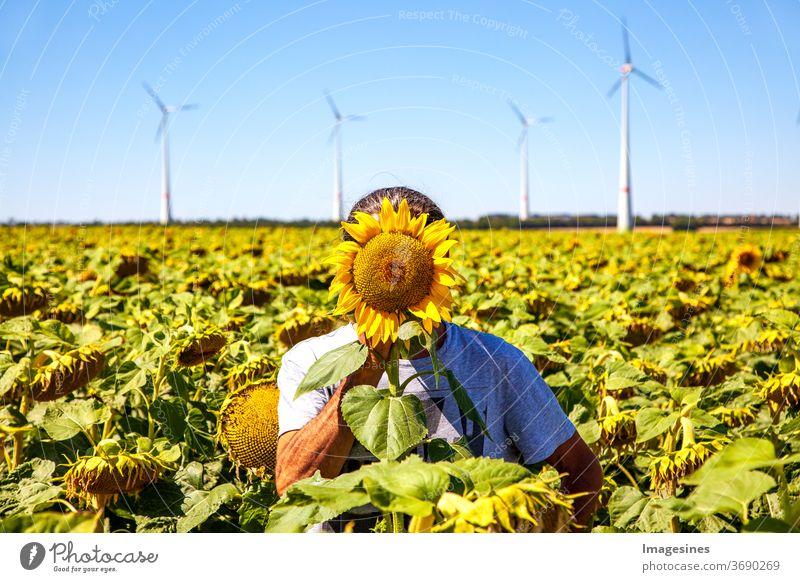 Anonymität. Sommerlandschaft gegen einen hellblauen Himmel. Mann stehend in einem gelben Feld von Sonnenblumen mit gelbem Kopf der Sonnenblume, die sein Gesicht bedeckt. Windturbinen Hintergrund