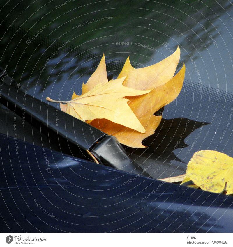 Herbst voraus (5) blatt herbst übergang transformation welk verwelken liegen auto Windschutzscheibe Wischerblatt Glasscheibe gelb schatten glänzen reflektieren