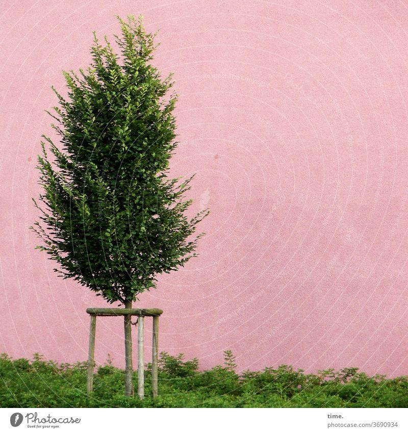 Jugendhilfemaßnahme baum rosa wand eingesperrt einsam allein knast gefangen grün bodendecker stehhilfe bindung befestigung Wachstum jung