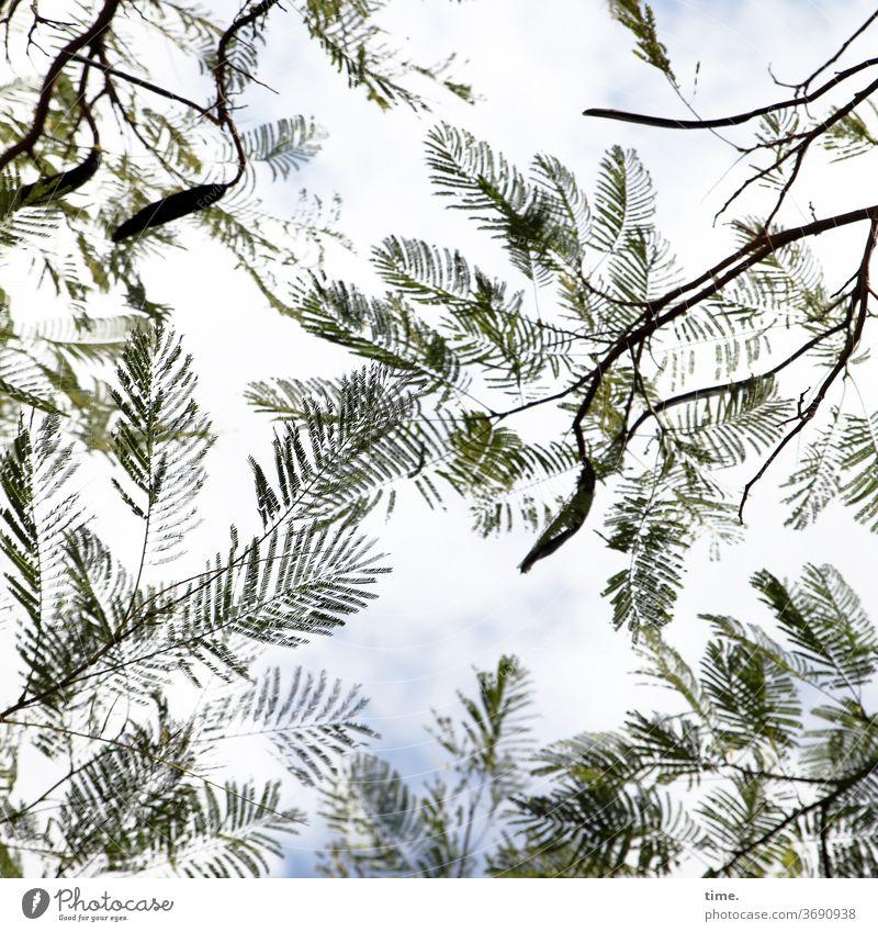 Frühwedler baum äste hoch Perspektive Natur pflanze filigran himmel luftig leicht Silhouette Menschenleer Leichtigkeit Inspiration elegant Leben Wärme natürlich