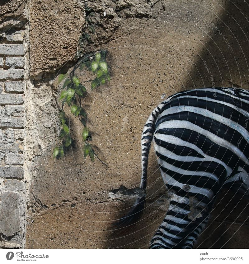 Arsch Graffiti streetart Street Mauer Kunst Straßenkunst Wandmalereien Zebra Fassade Tier