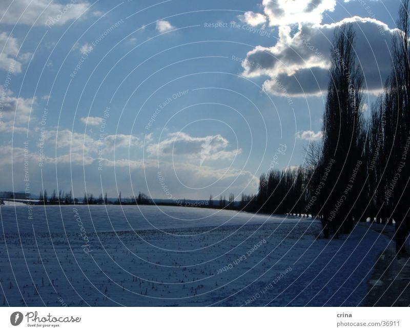 Sonntagsspaziergang Himmel Baum Sonne blau Wolken Schnee Allee