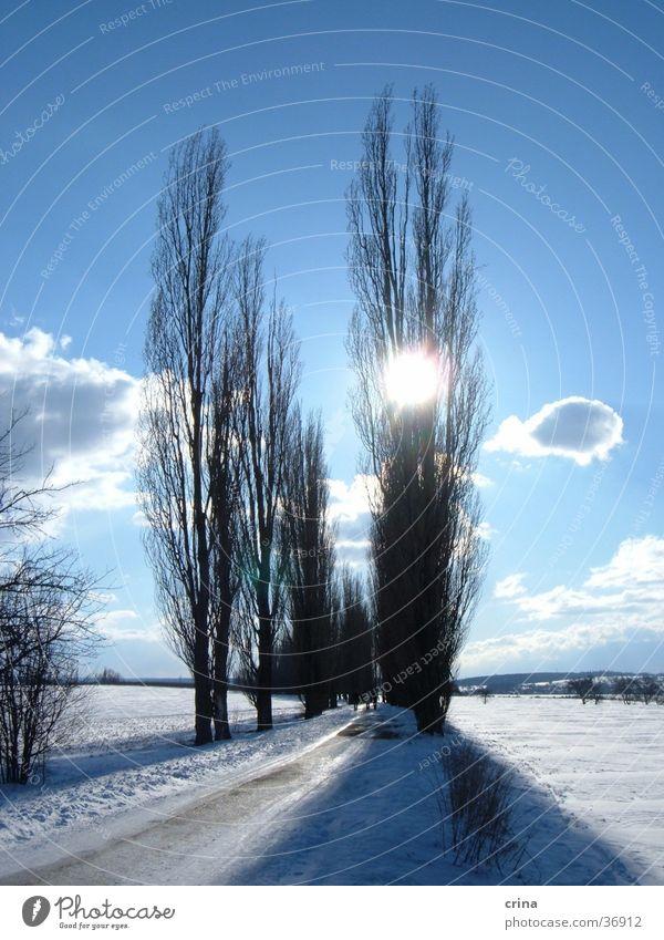 Sonntagsspaziergang2 Baum Allee Gegenlicht Wolken weiß Schnee Sonne Himmel blau