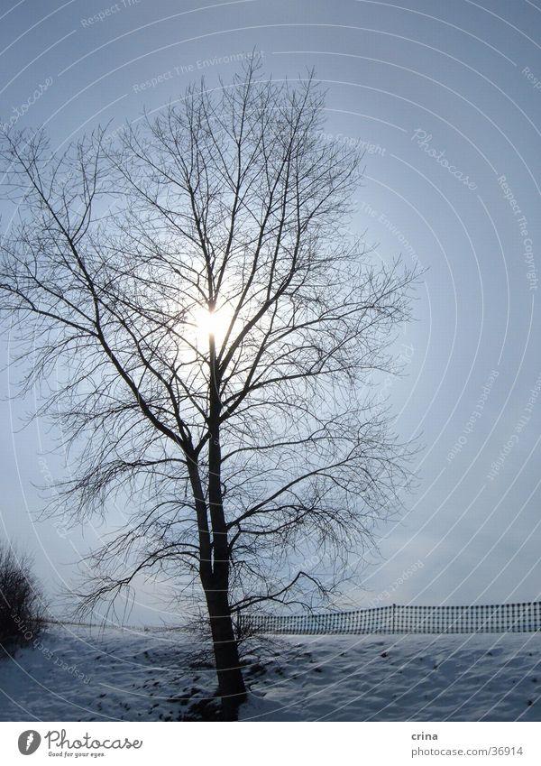 Wintertag Baum Gegenlicht Schnee Sonne Himmel blau