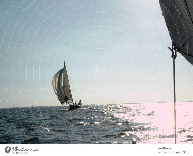 Regatta Ijsselmeer Sportboot Wasserfahrzeug Schifffahrt Segel Spinacker Jacht