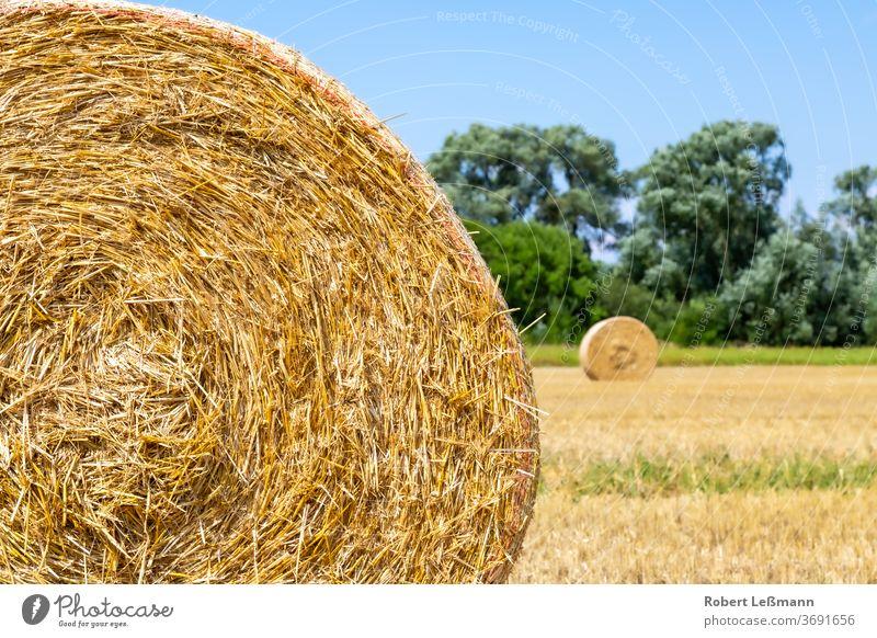 ein Feld mit vielen Strohballen, mit einem blauen Himmel Agra Ackerbau Hintergrund Ballen Tag getrocknet trocknen Bauernhof golden Korn Ernte Heu Heuballen