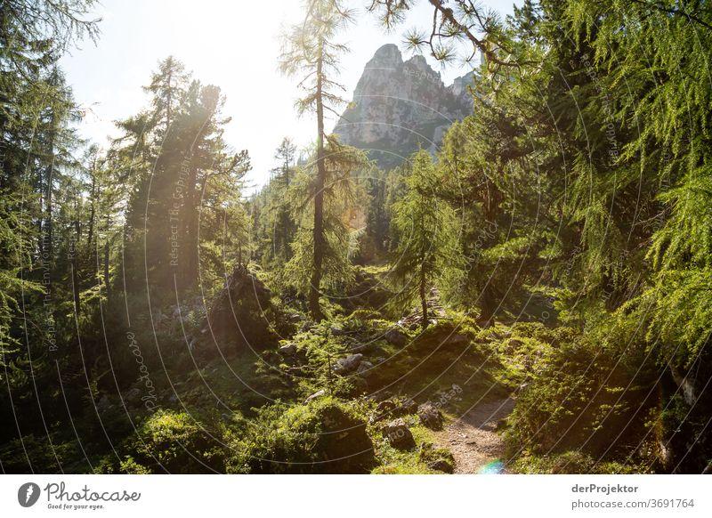 Zauberwald im Gegenlich am Achensee Wald Natur Naturschutzgebiet anstrengen Umwelt Mut Beginn Berge u. Gebirge wandern Farbfoto Textfreiraum rechts Schatten